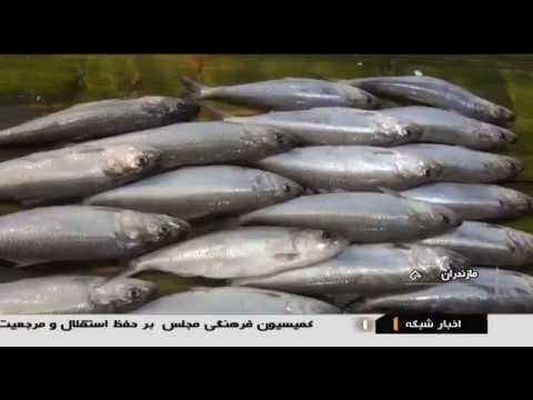 Iran Fish Farming & Packaging Industry, Babolsar County پرورش و بسته بندي ماهي بابلسر ايران