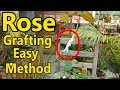 How to Graft English Rose With Desi Rose | Easy Method of Grafting