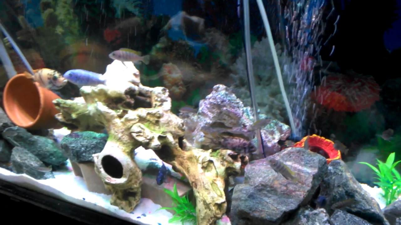 lombrices intestinales en peces