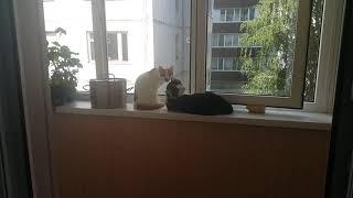 Коты как мужики и наоборот