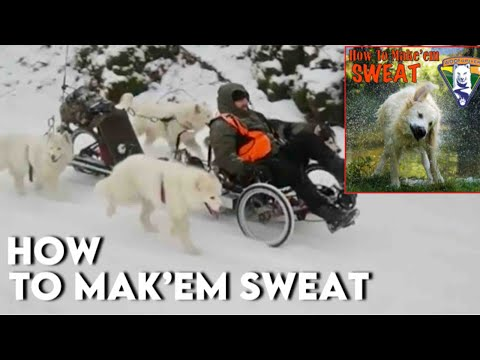 WooFDriver On Tour With Husky Dogs On Schuylkill River Trail