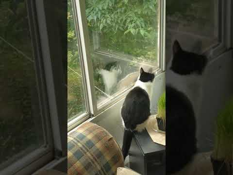 """my-cat-""""nitro""""-finds-a-squirrel-on-our-house's-sunroom-window"""