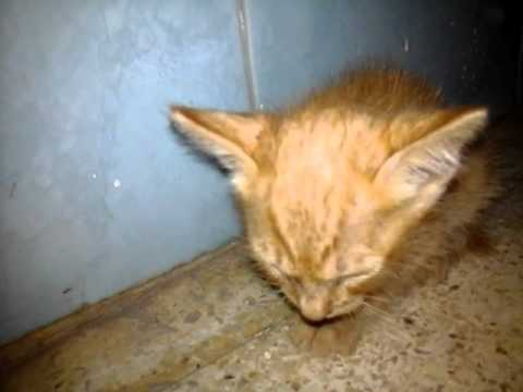 Download 93+  Gambar Kucing Yang Lucu Bergerak Imut Gratis