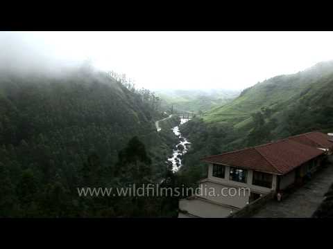Munnar : The Kashmir of the south India