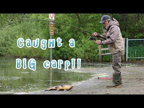 Caught a big fish - carp at Deer Lake, Burnaby BC Canada