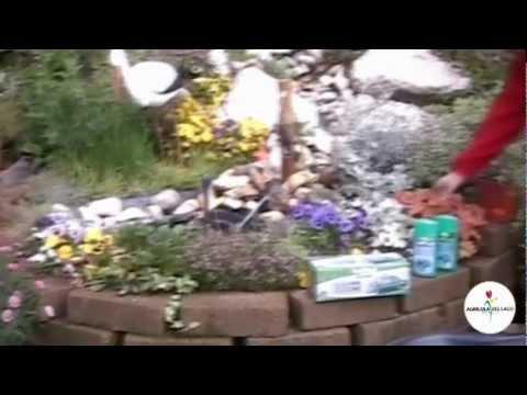 Un laghetto in giardino youtube for Laghetto giardino zanzare