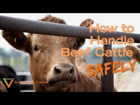 Right from the Start-Beef Cattle