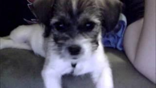 Kiwi! (9 Week Old Puppy)