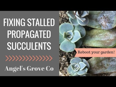 How to Speed Up Succulent Propagation