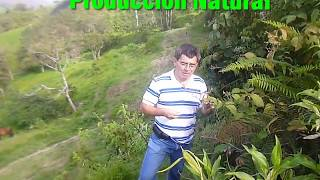 SAN ANDRES DE CUTERVO- PEQUEÑO REPORTAJE AL ALTO PAJONAL CAJAMARCA PERÚ