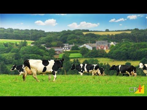 Clique e veja o vídeo Curso Formação de Pastagens com Plantio Direto CPT