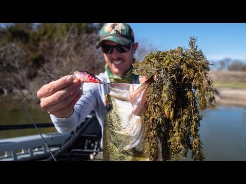 Crankbait Fishing Bass ABOVE THICK GRASS | CRUSHING IT!