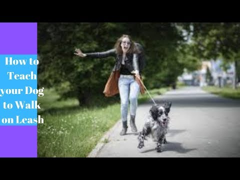 how-to-teach-your-dog-to-walk-on-leash