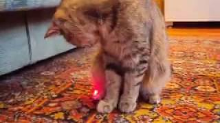 Кошка Ромашка и лазер))