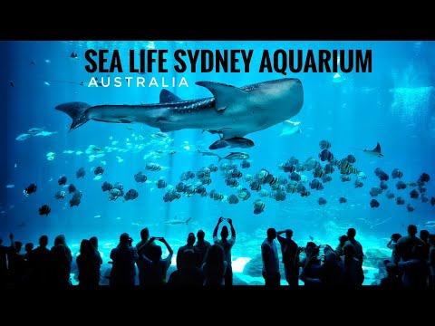 Whale Shark Ray Fish | Sea Life Sydney Aquarium Australia |Taronga Zoo | Under Water Life