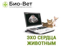 ЭХО сердца животным. Ветеринарная клиника Био-Вет.