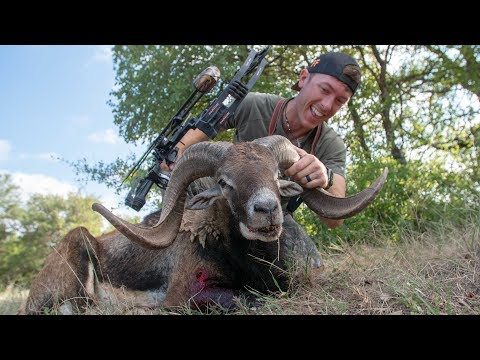 Exotic RAM Archery Hunt (Heart Shot) Clean & Cook