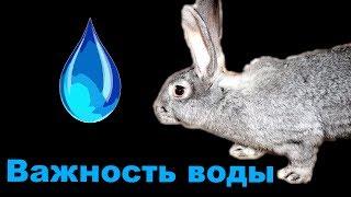 Вода для кроликов  КРОЛИКОВОДСТВО
