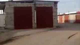 Лоси бегают по Ульяновску
