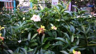 видео Покупка ДЕШЕВОЙ орхидеи, Что делать первым делом?