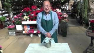 プロトリーフ直営の園芸をたのしむオンラインショップ http://www.proto...
