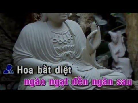 KARAOKE HOA BẤT DIỆT -  TÂN CỔ (Hát với ĐẠI SƯ CA)