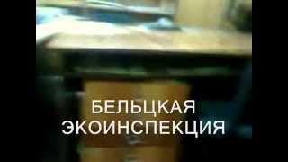 Cine a omorît peștele de la Bălți (ru)
