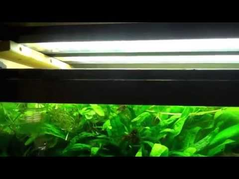 Setting up your first Planted Aquarium Part 3 Lighting