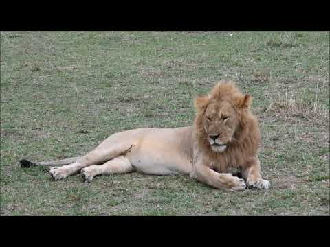 Kenya 2017 - Canon - GoPro - Travel Video