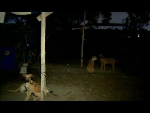 Lurín: Niña muere tras ser atacada por cuatro perros