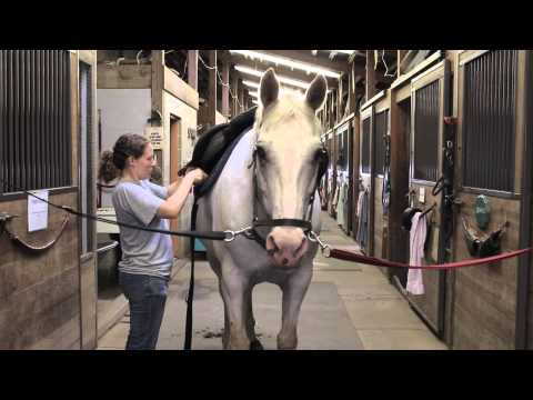 Horse Therapy | 2015 WHYY Young Journalists