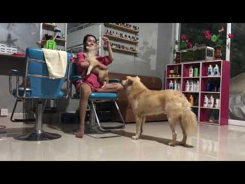 LOVELY SMART GIRL PLAYING BABY CUTE DOGS AT HOME HOW TO PLAY WITH DOG & FEED BABY DOGS #129