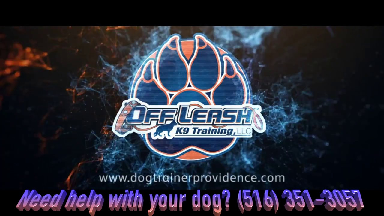 Providence Dog Trainers: The Horrors of E-Collar Training | Best Dog Trainers in RI - YouTube