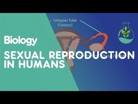 Lesbiab porns orgee video