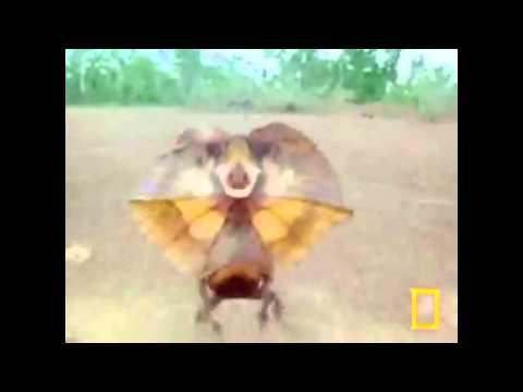 Lizard Running (With Music)