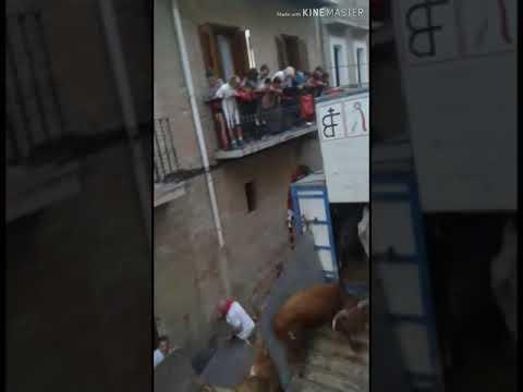 Una vaca se escapa en Puente la Reina