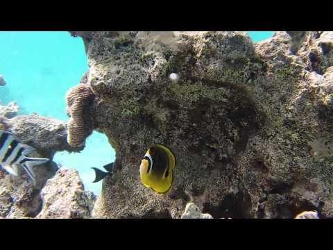 Snorkeling Cook Islands