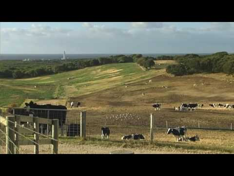 Live export - Australian dairy cattle exported to Saudi Arabia Travel Video