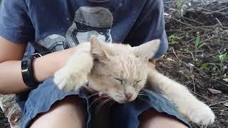 Сега выживает в лису приколы с котом