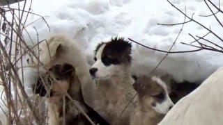 Иваново. Вот такой приют организовали себе бездомные собаки