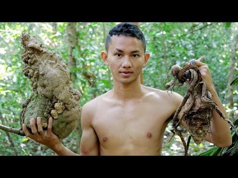 Primitive Technology : Research food Biggest Potato In Forest : Wilderness Life