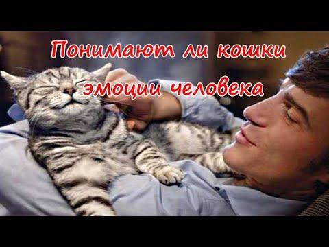 Вопрос: Понимают ли кошки своё мяуканье И что окружающие их понимают?