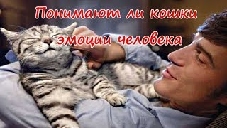 ПОНИМАЮТ ЛИ КОШКИ ЭМОЦИИ ЧЕЛОВЕКА  DO CATS UNDERSTAND HUMAN EMOTIONS