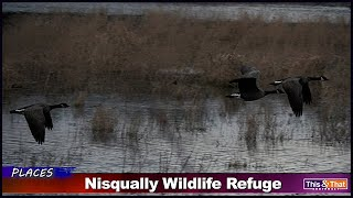 Billy Frank Jr. Nisqually Wildlife Refuge