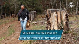 Este delito ambiental crece mientras los operativos para proteger los bosques han caído un 75%. En México, ya hay 122 zonas con procesos críticos de deforestación. En una de ellas, en el norte de Hidalgo, vecinos se disputan desde hace dos décadas la propiedad de un bosque entre denuncias, amenazas y asesinatos