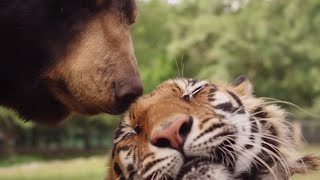 Are Animals Capable Of Feeling Complex Emotions? | Animal Odd Couples | Pets & Vets