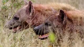Nat Geo Wild: Смертоносная Африка. Саванна