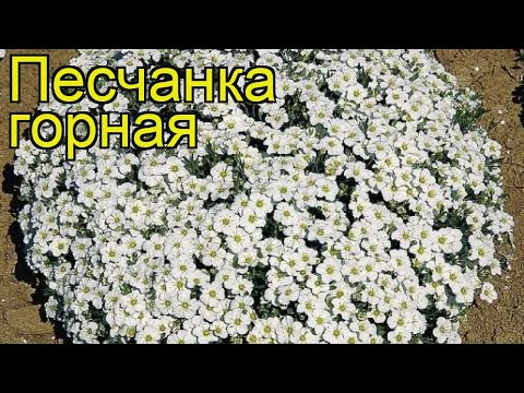 Вопрос: Гутчинзия, что за растение?