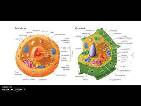 Animal Cell & Plant Cell Functions