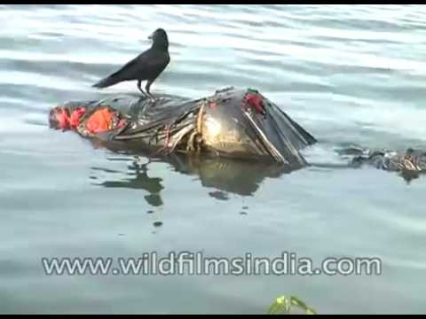 ganges river dead bodies - 480×360
